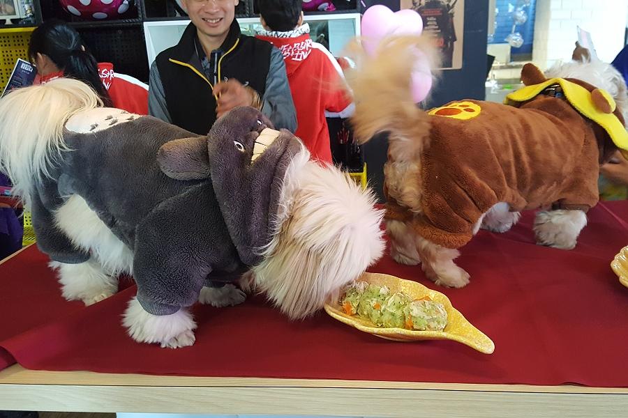 寵物友善餐廳前進台中逢甲商圈 帶毛小孩去品嚐義式料理
